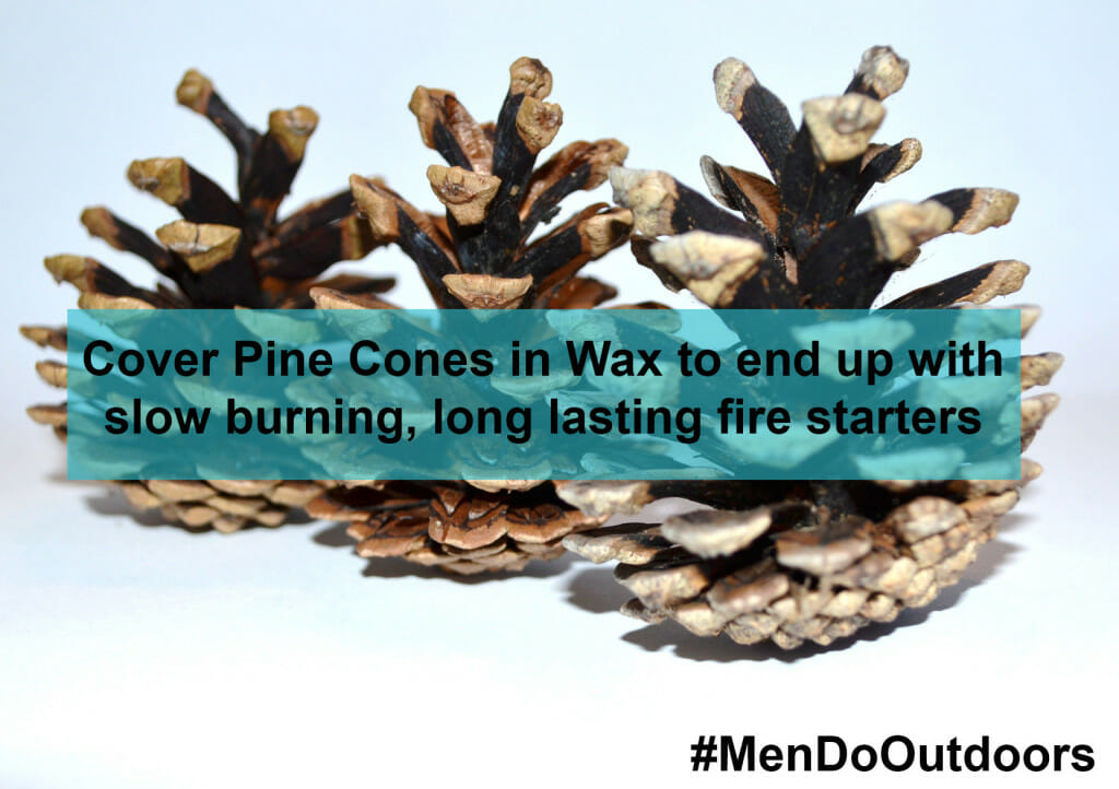 Pine cones Covered in wax
