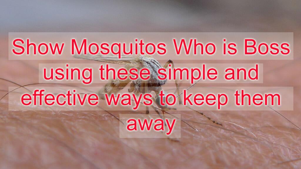 mosquito repellent #mendooutdoors