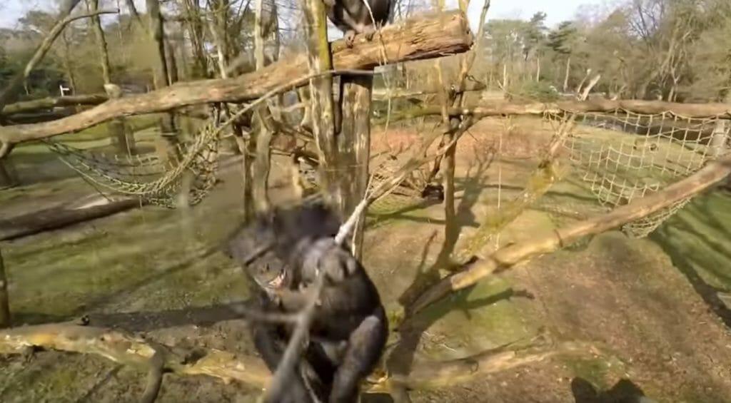 drone fails Monkey